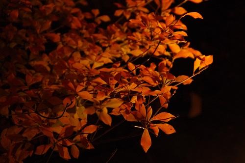 0917醍醐寺ライトアップ
