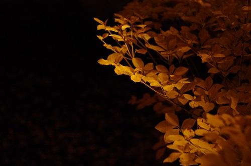 0920醍醐寺ライトアップ