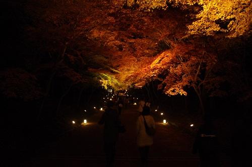 0932醍醐寺もみじのアーチライトアップ
