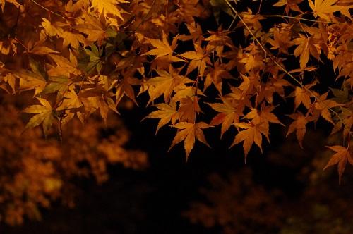 0934醍醐寺ライトアップもみじ