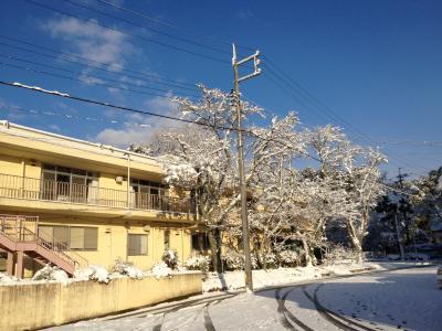 12月26日 雪の朝 IMG_0588