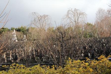 智積院裏手の墓地 H25.12.10撮影