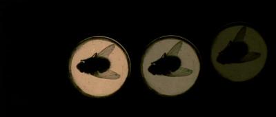 4匹の蠅30