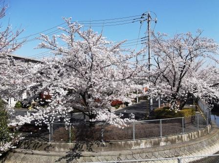 sakura2_20120413220042.jpg