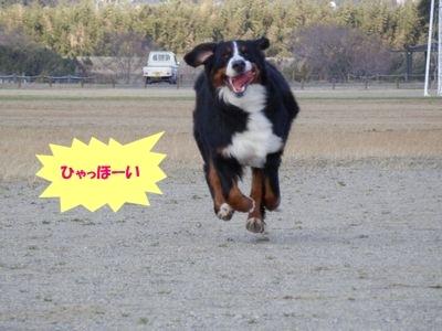 dassyu2