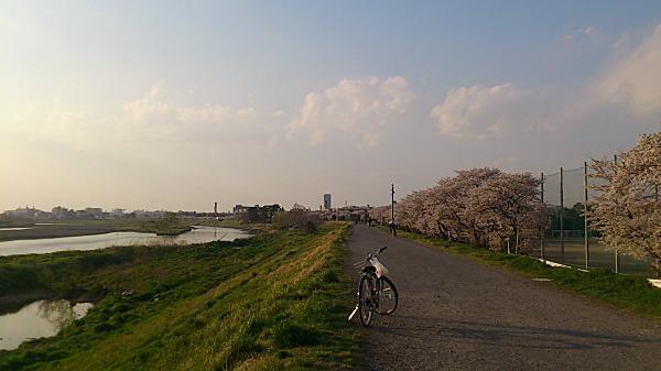 20120409tamagawa03.jpg