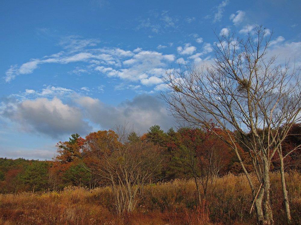 秋色の霧ヶ谷湿原