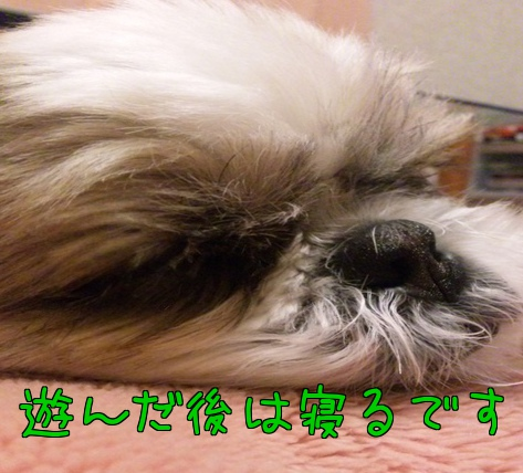 gzuX_URMNbOw4q4.jpg