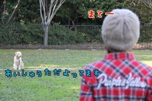 dco7p.jpg