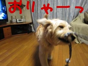 sJyx0.jpg