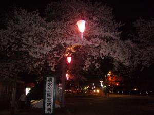 桜 清水公園