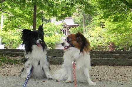 2011.5.14仁比山神社 074