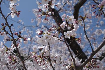 2012.4.1レオくん、あずきちゃん、大村公園 093