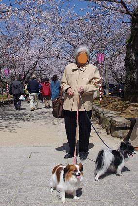2012.4.1レオくん、あずきちゃん、大村公園 091