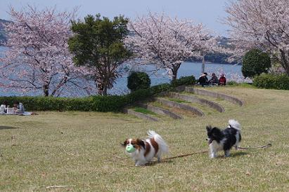 2012.4.8四本堂公園、西海橋 052