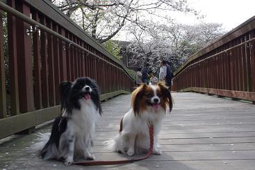 2012.4.8四本堂公園、西海橋 112