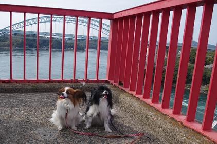 2012.4.8四本堂公園、西海橋 107
