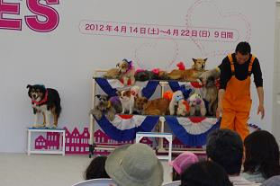 2012.4.15サーカス・障害物・撮影 003