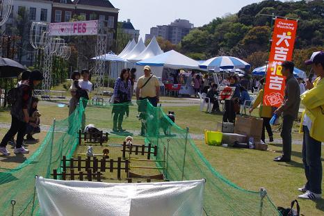 2012.4.15サーカス・障害物・撮影 052