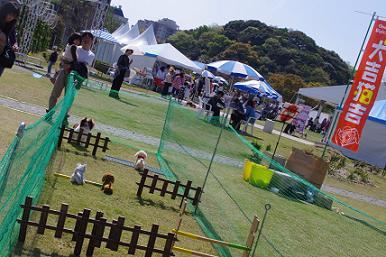 2012.4.15サーカス・障害物・撮影 050