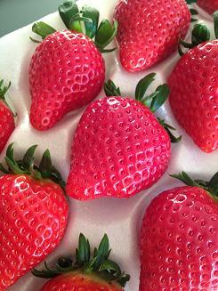 sembikiya strawberry1