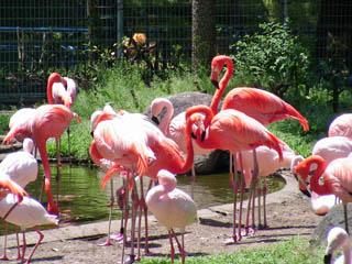 動物園0002.jpg