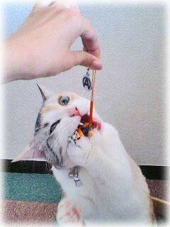 じゃれ猫2