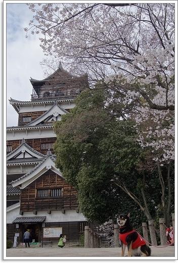 12.04.07 広島城 さくら 031