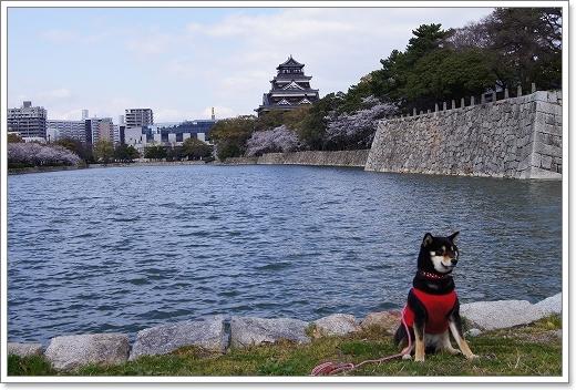 12.04.07 広島城 さくら 032