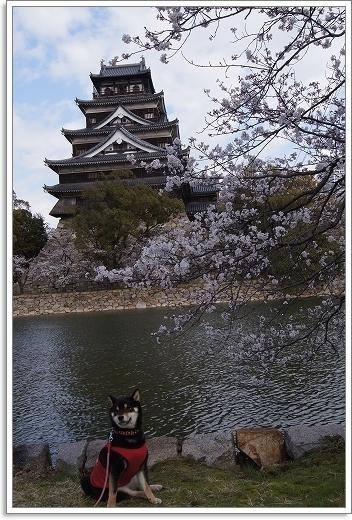 12.04.07 広島城 さくら 042