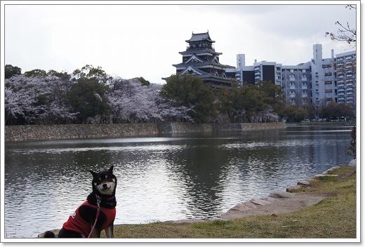 12.04.07 広島城 さくら 054