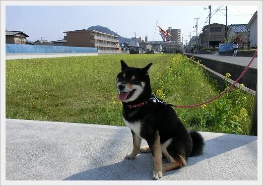 12.04.09 散歩 002