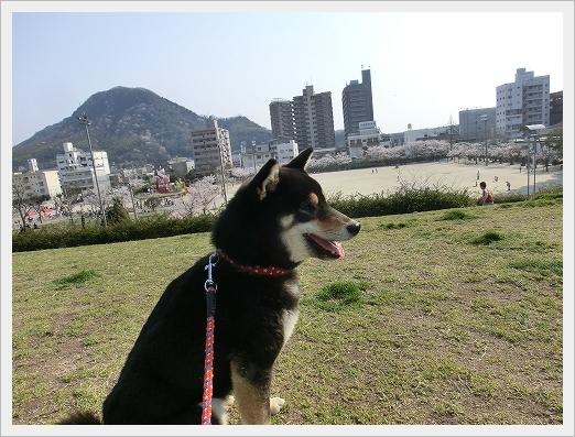 12.04.09 散歩 013