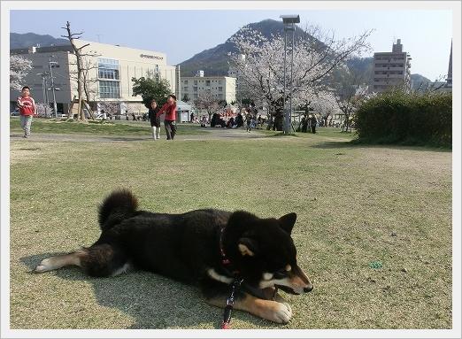 12.04.09 散歩 012