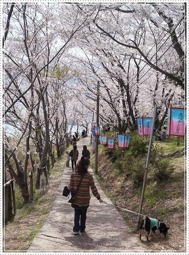 12.04.15 安芸津 正福寺 017
