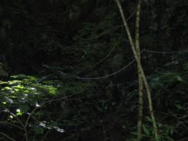 尾白川渓谷3