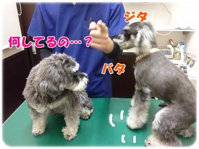 11_25+007_convert_20111125100831.jpg