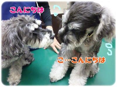 11_25+019_convert_20111125101044.jpg