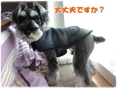 11_26+015_convert_20111126142118.jpg