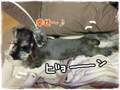 11_29+013_convert_20111129174404.jpg