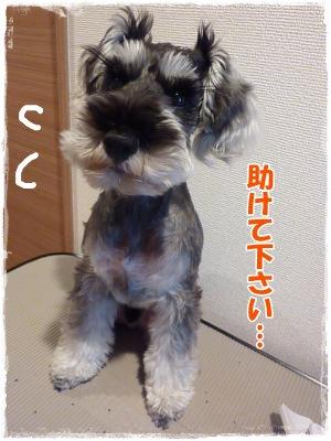 11_29+027_convert_20111129180852.jpg