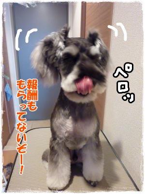 11_29+033_convert_20111129181009.jpg