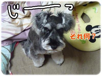 11_30+024_convert_20111130190704.jpg