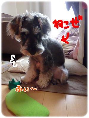 12_10+003_convert_20111210135236.jpg