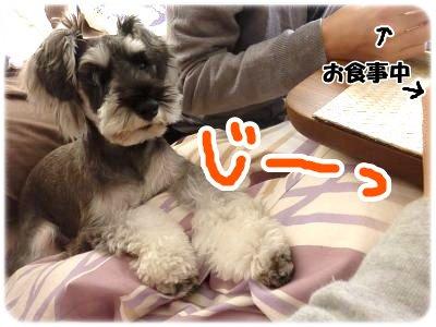 12_11+026_convert_20111213113607.jpg