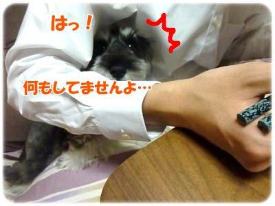 12_13+011_convert_20111213114031.jpg