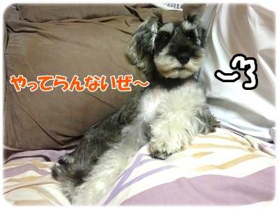 12_13+016_convert_20111213114113.jpg