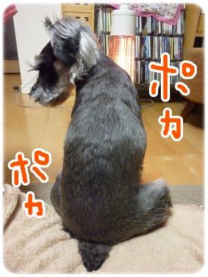 12_14+007_convert_20111214101713.jpg