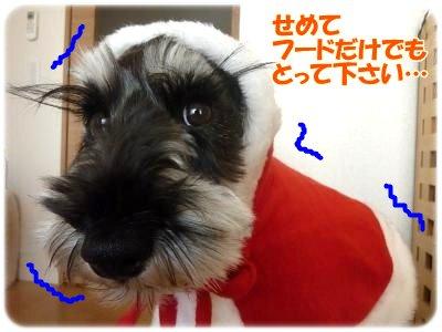 12_16+022_convert_20111216101035.jpg