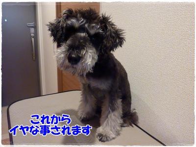12_22+005_convert_20111222183414.jpg